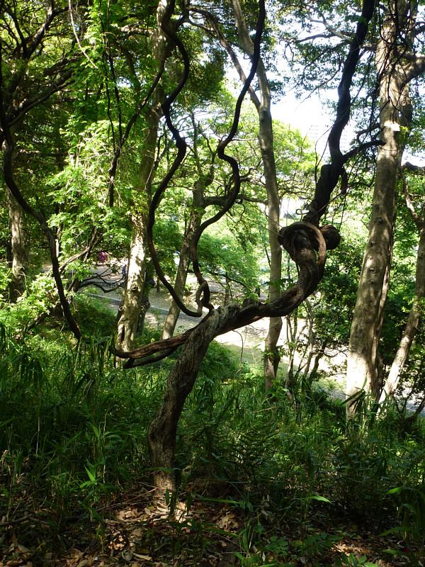 こういう木があると幽玄さを感じますね
